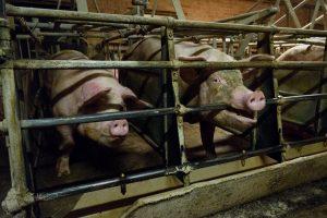 Kuva: Oikeutta eläimille, Satakunta 2016